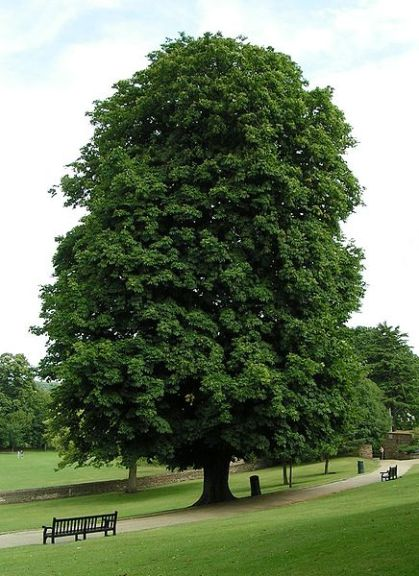 British Typical Tree. Save a Tree - Choose Parax Stone Paper