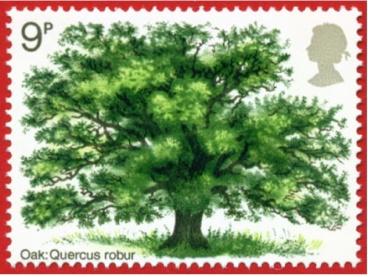 Oak Tree. Save a Tree - Choose Parax Stone Paper