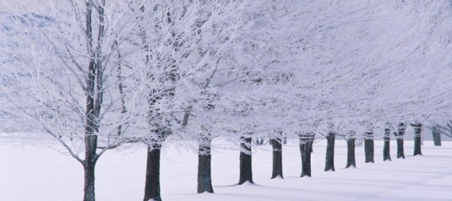 British Winter Trees. Save a Tree - Choose Parax Stone Paper