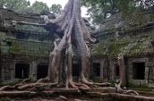 Ta Prohm Trees of Cambodia