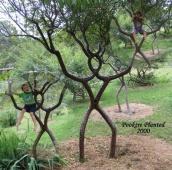 Stunning-Art-of-Arborsculpture-17