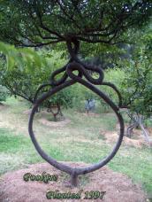 Stunning-Art-of-Arborsculpture-20