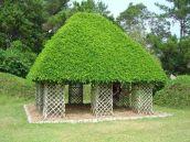 Stunning-Art-of-Arborsculpture-4