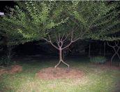 Stunning-Art-of-Arborsculpture-7