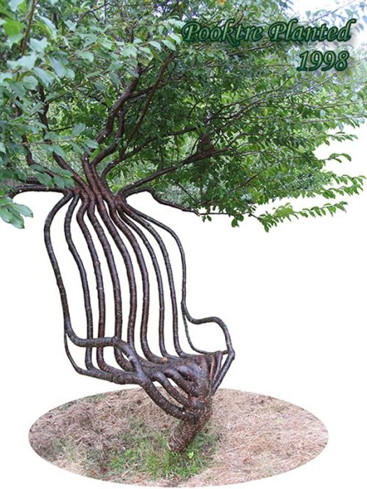 Stunning-Art-of-Arborsculpture